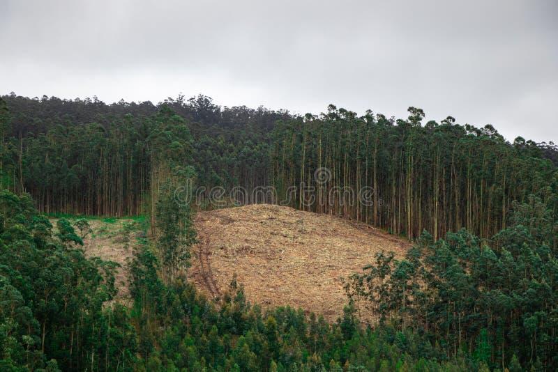 Bosque despoblado de ?rboles grande por completo de la ruina que corta de madera Paisaje ecol?gico de la crisis de Galicia, Espa? fotos de archivo libres de regalías
