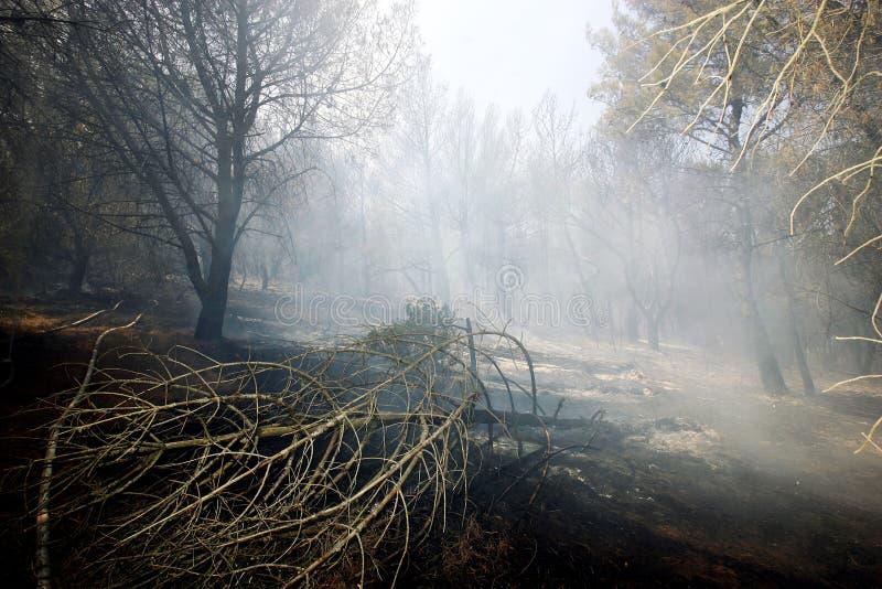 Bosque después del fuego foto de archivo