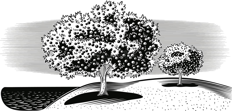 Bosque do citrino pelo mar ilustração stock