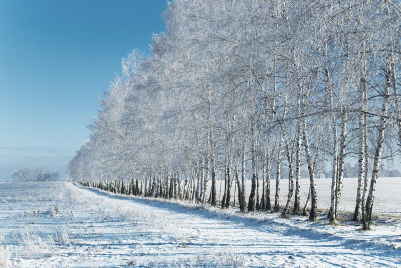 Bosque do inverno fotos de stock royalty free