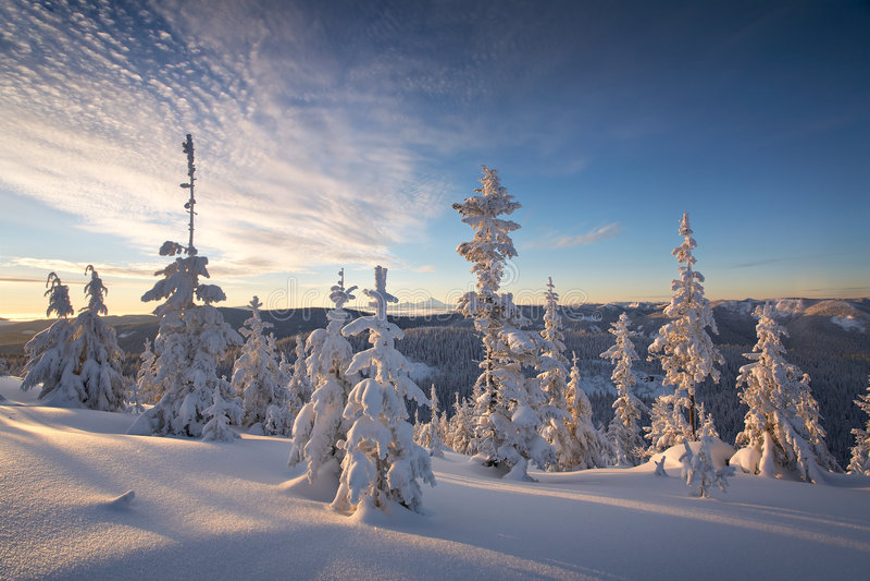 Bosque do inverno foto de stock royalty free