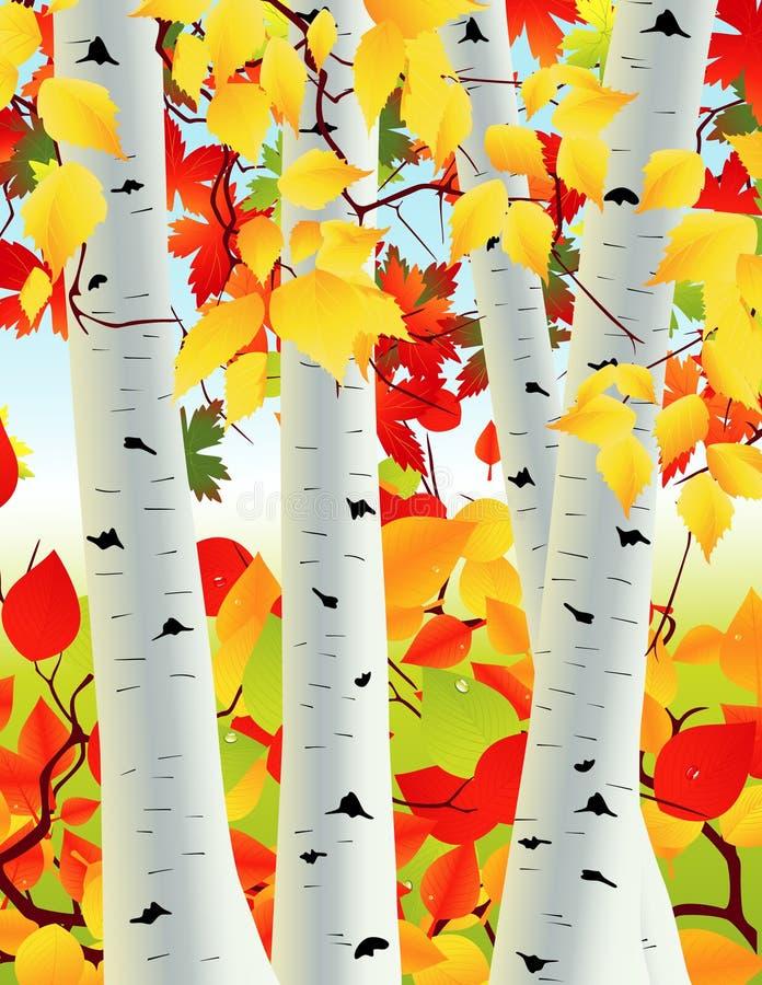 Bosque do vidoeiro ilustração royalty free