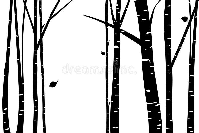 Bosque do vidoeiro com folha de queda ilustração royalty free