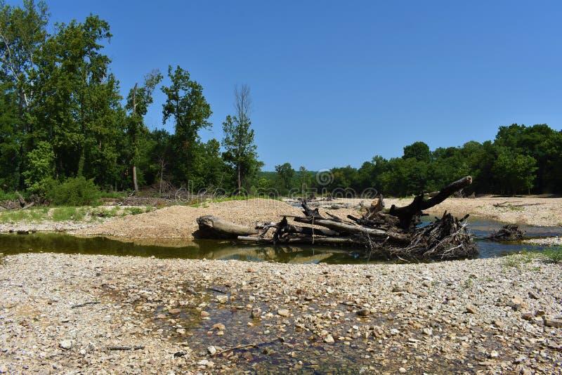 Bosque dos locustídeo, Oklahoma fotos de stock
