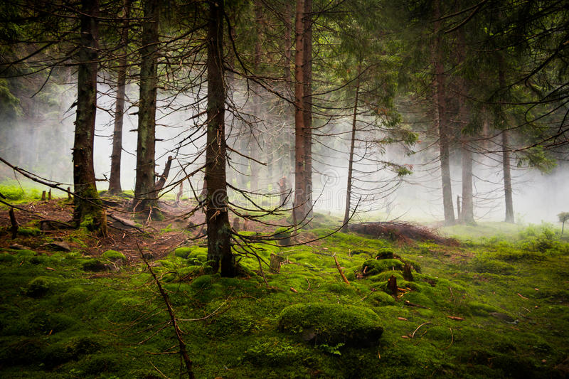 Bosque dramático con niebla imágenes de archivo libres de regalías