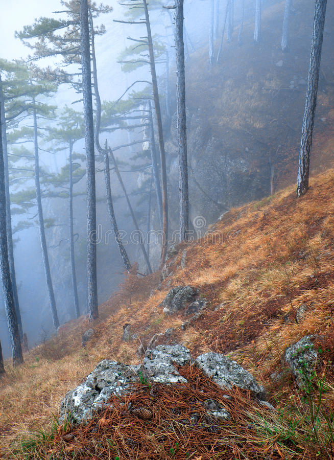 Bosque durante la niebla imágenes de archivo libres de regalías