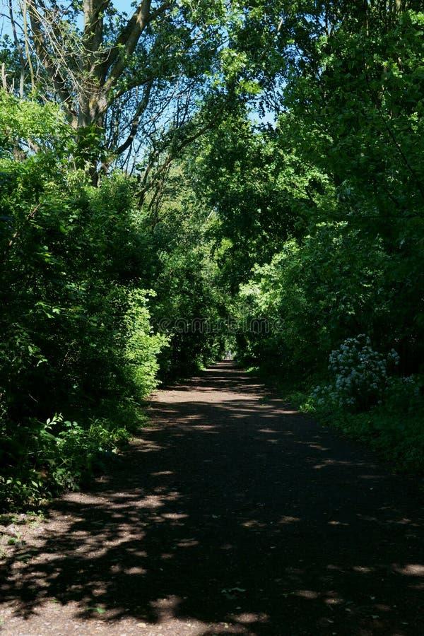 Bosque en Almere, los Países Bajos foto de archivo libre de regalías