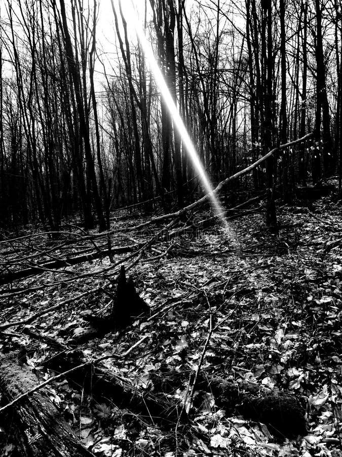 Bosque en caminar imagen de archivo libre de regalías