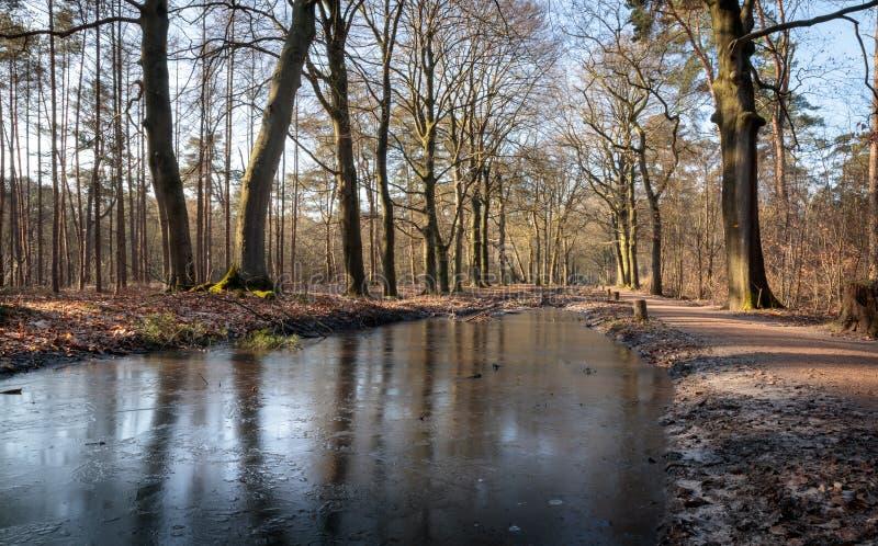 Bosque en Clingendael La Haya Holanda fotografía de archivo libre de regalías