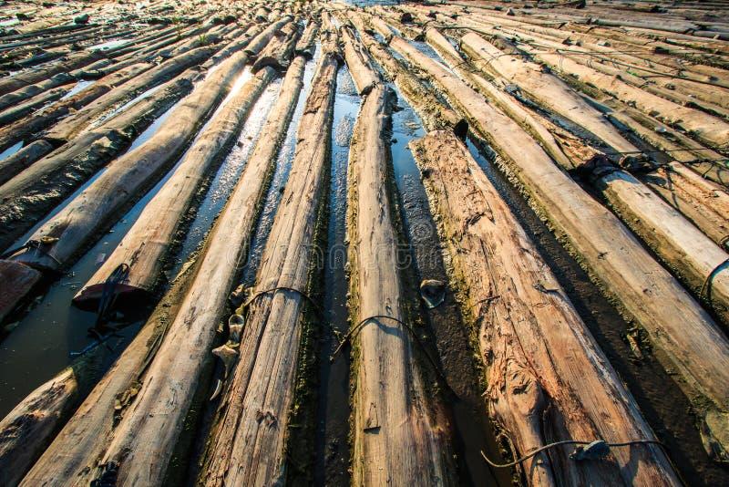 Bosque en el agua fotos de archivo libres de regalías