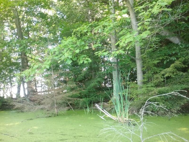 Bosque en el agua fotografía de archivo