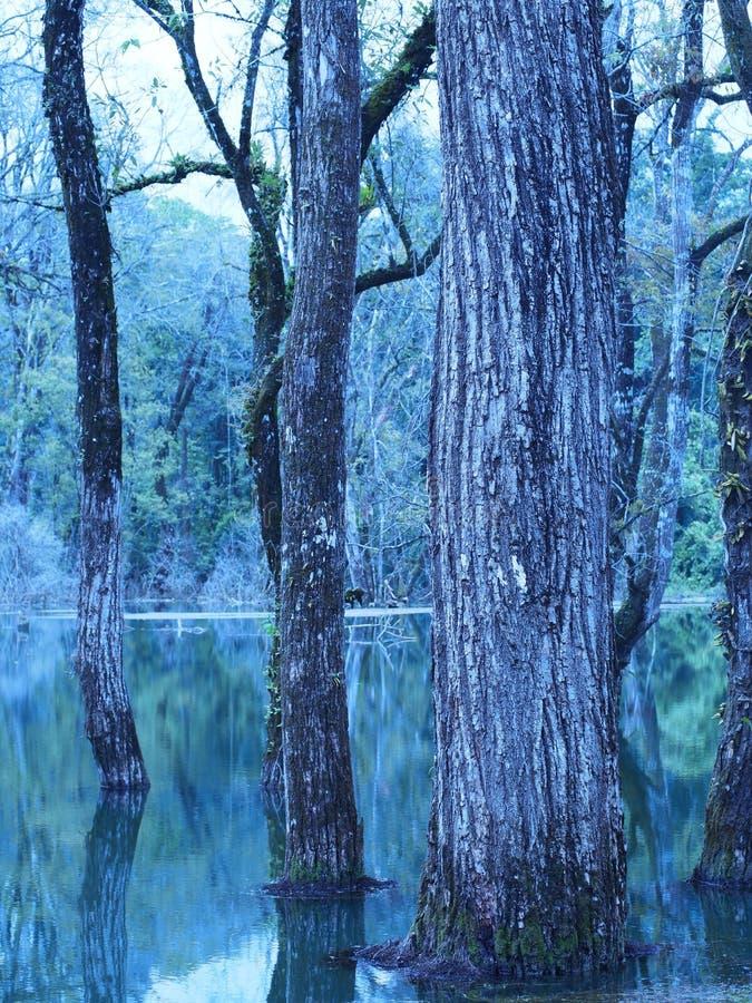 Bosque en el agua foto de archivo