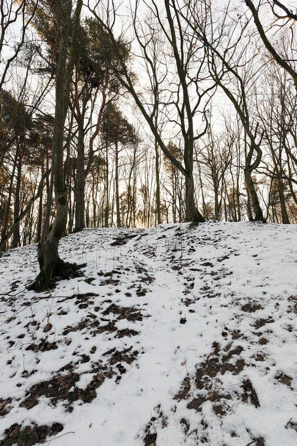 Bosque en el amanecer fotos de archivo