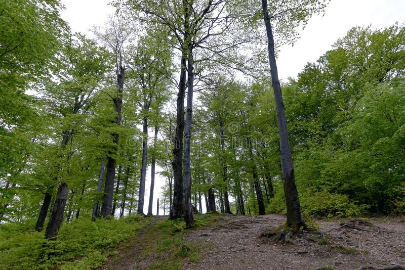 Bosque en el parque de Polyanitsky foto de archivo