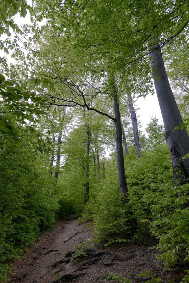 Bosque en el parque de Polyanitsky fotografía de archivo