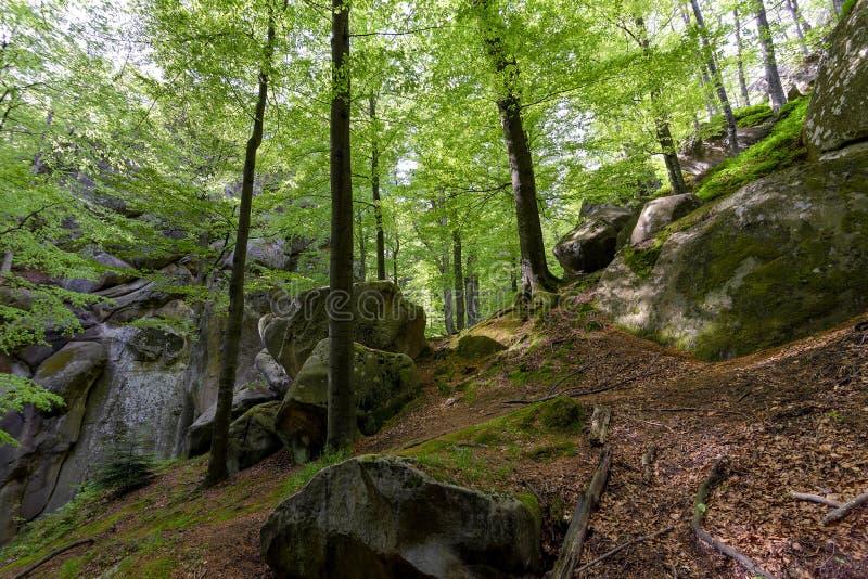 Bosque en el parque de Polyanitsky imagen de archivo