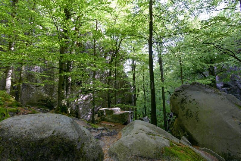 Bosque en el parque de Polyanitsky imagen de archivo libre de regalías