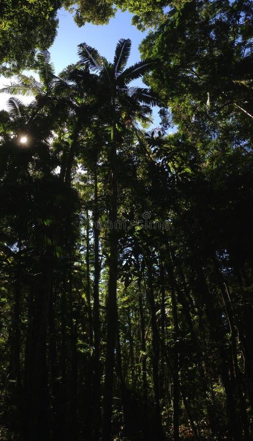 Bosque en el parque nacional de Noosa fotografía de archivo