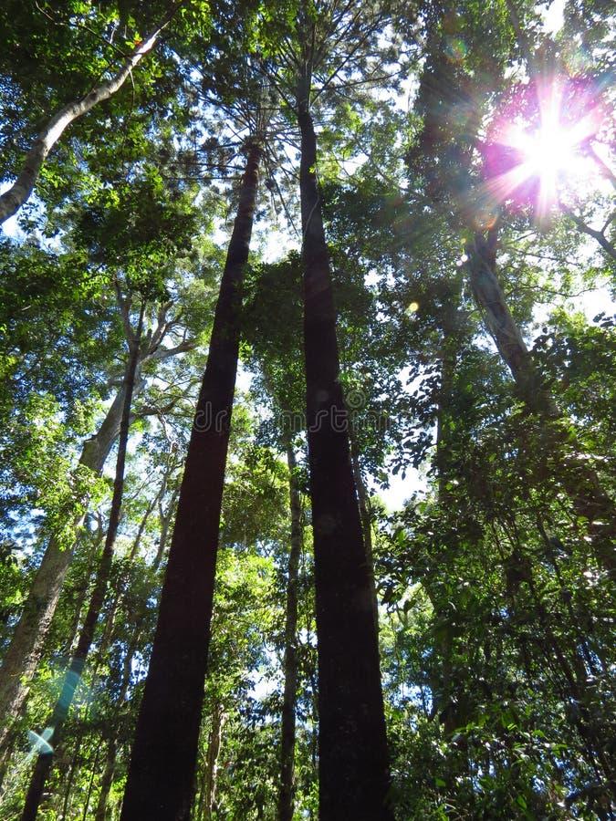 Bosque en el parque nacional de Noosa imagen de archivo libre de regalías