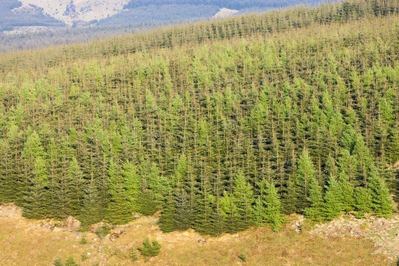 bosque en el parque nacional de Northumberland, Inglaterra imagenes de archivo
