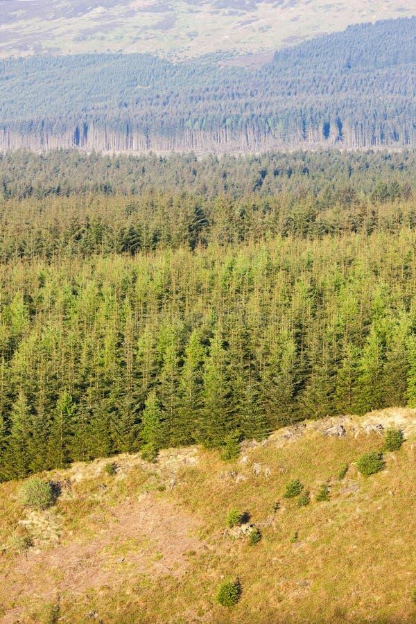 bosque en el parque nacional de Northumberland, Inglaterra fotografía de archivo libre de regalías