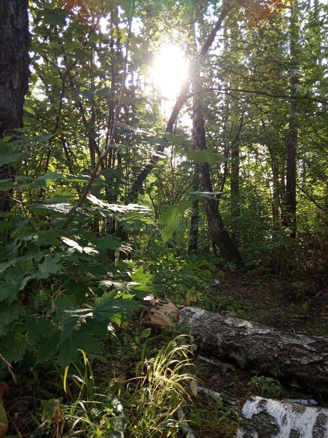 Bosque en el verano foto de archivo