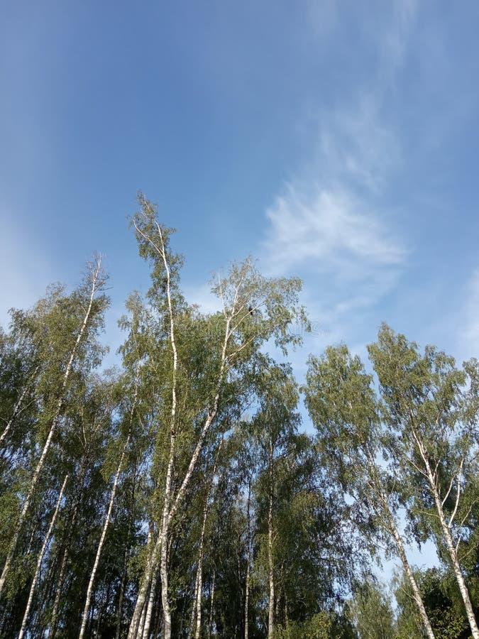 Bosque en el verano fotografía de archivo libre de regalías