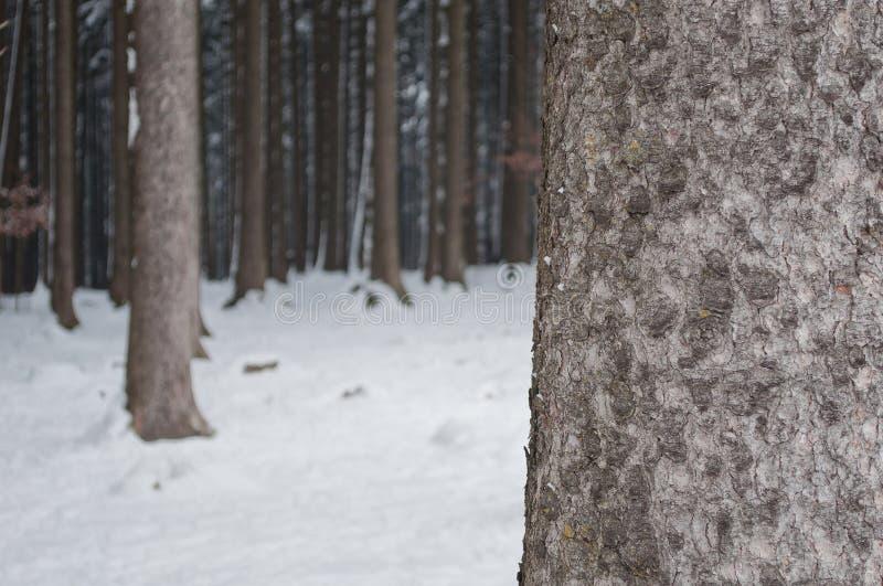 Download Bosque en invierno foto de archivo. Imagen de rural, hielo - 41921604
