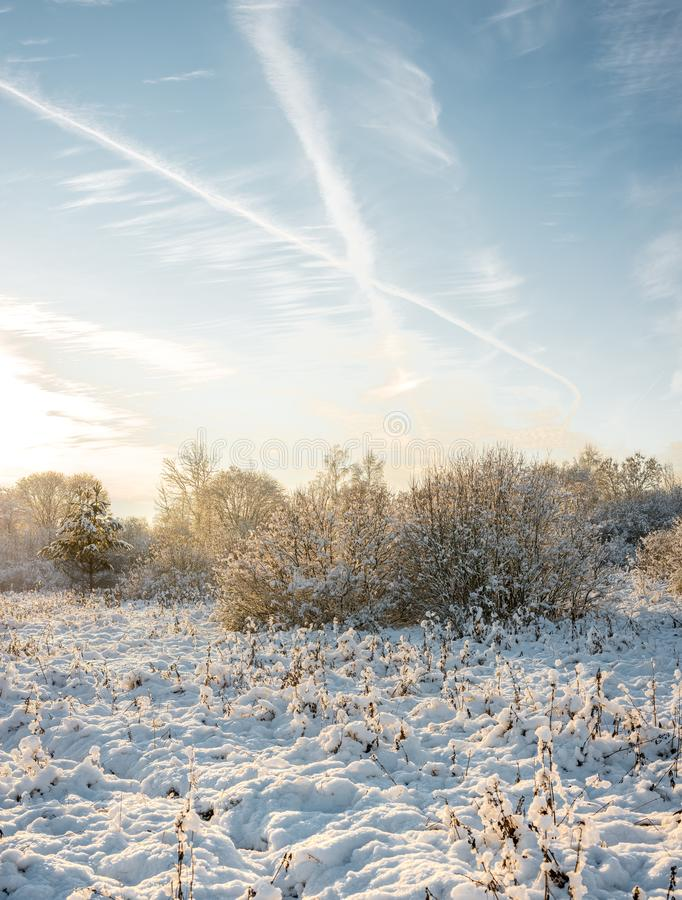 Bosque en invierno debajo de las nubes /sunset en el bosque del invierno imágenes de archivo libres de regalías