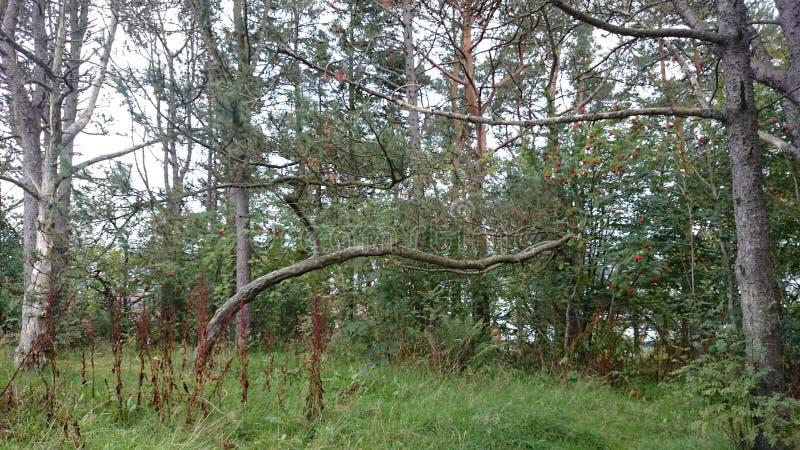 Bosque en la caída fotografía de archivo libre de regalías
