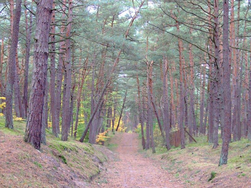 Bosque en la caída 56 fotos de archivo libres de regalías