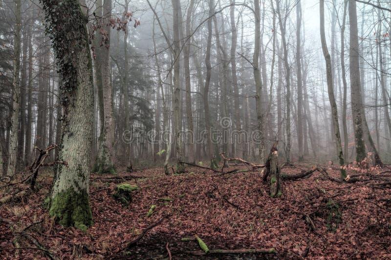 Bosque en la caída en Baviera imágenes de archivo libres de regalías