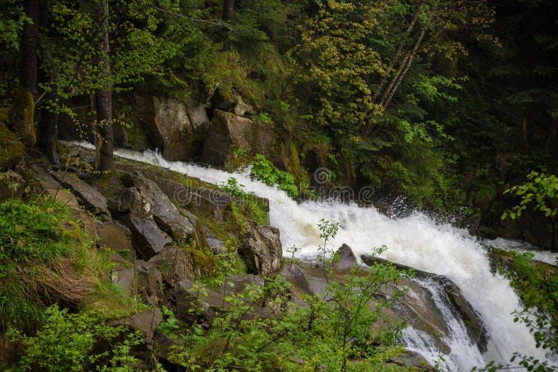 Bosque en la cascada de CaÑŒyanka imagenes de archivo