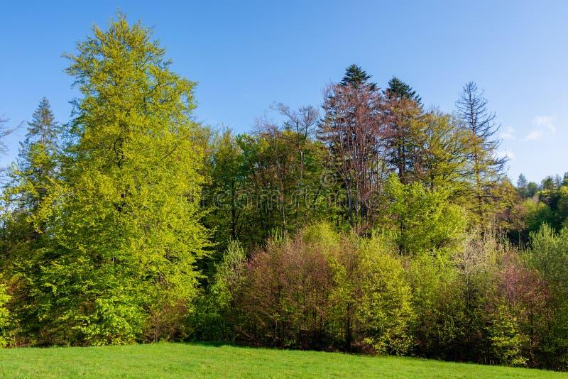 Bosque en la colina en primavera imagen de archivo