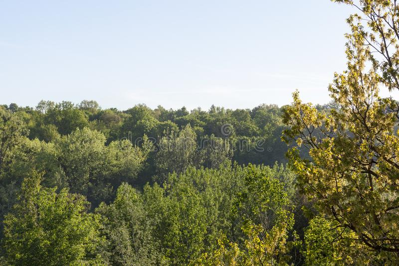Bosque en la estación de primavera imagen de archivo libre de regalías