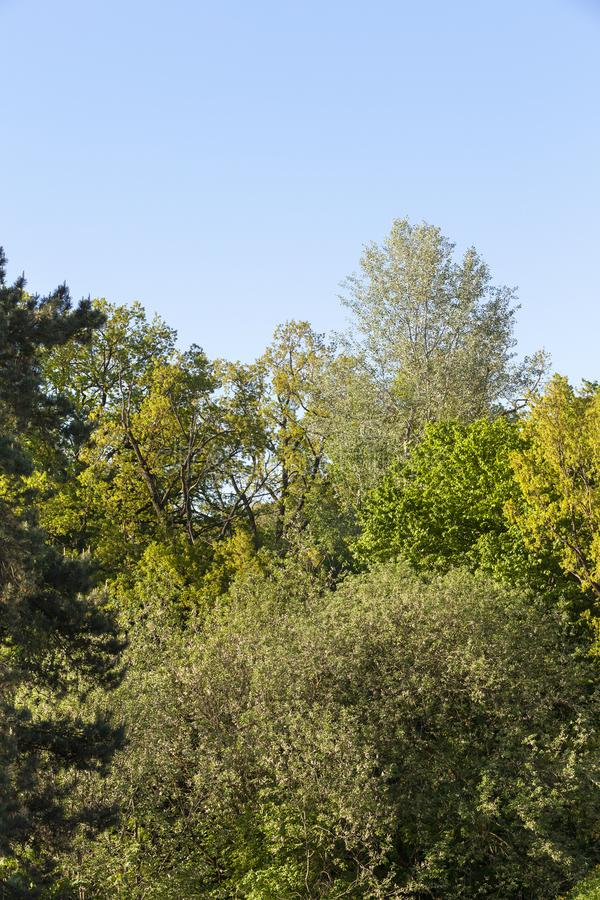 Bosque en la estación de primavera fotografía de archivo libre de regalías