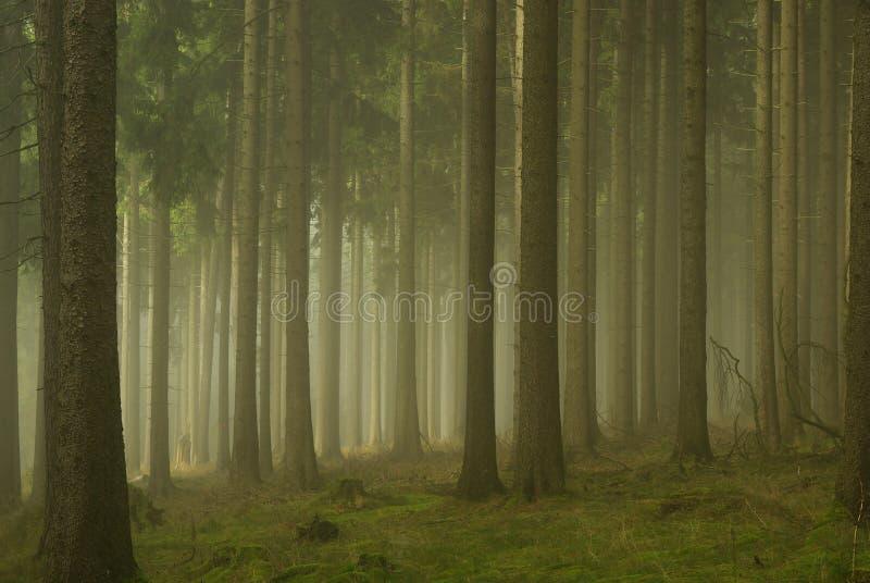 Bosque en la niebla 01 foto de archivo libre de regalías
