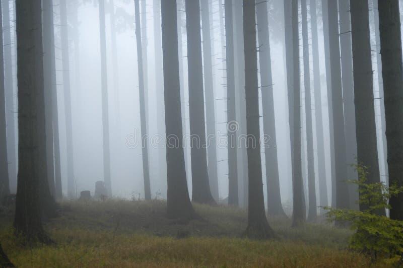 Bosque en la niebla fotos de archivo libres de regalías