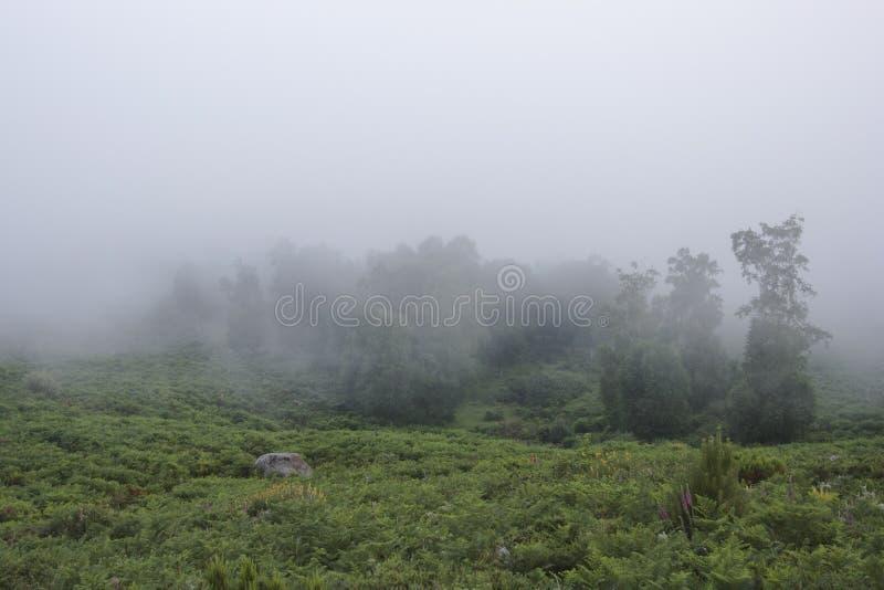 Bosque en la niebla de la mañana imagen de archivo libre de regalías