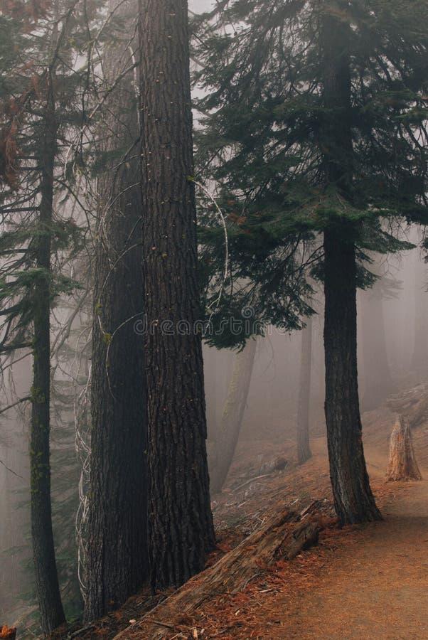 Bosque en la niebla, parque nacional de Yosemite fotos de archivo