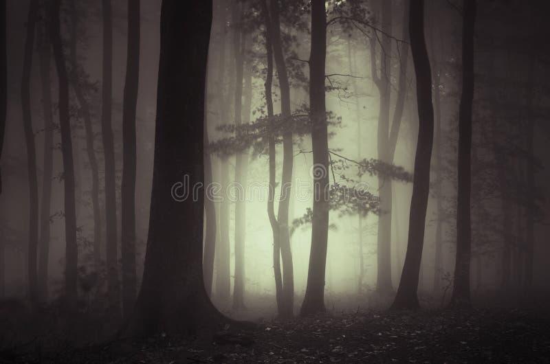 Bosque en la noche con niebla misteriosa foto de archivo libre de regalías