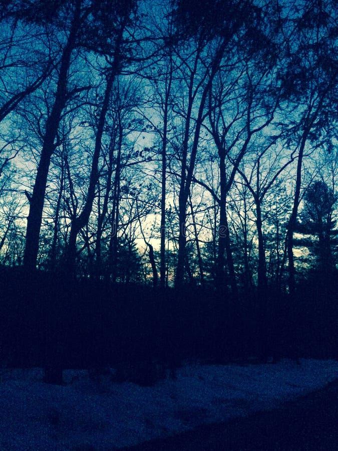 Bosque en la puesta del sol foto de archivo libre de regalías