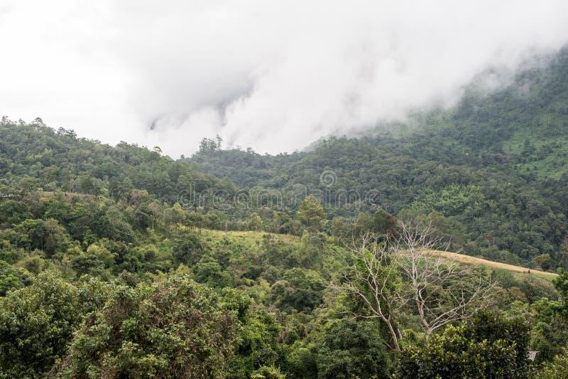 Bosque en las montañas cubiertas en la niebla foto de archivo libre de regalías