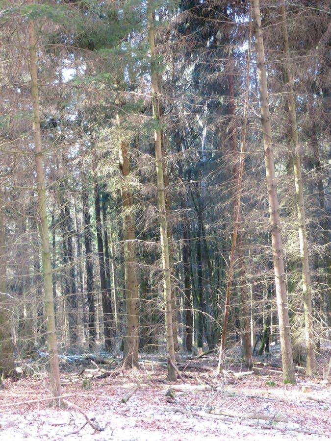 Bosque en luz del sol fotografía de archivo libre de regalías