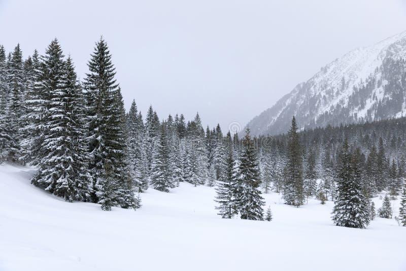 Bosque en montañas fotos de archivo