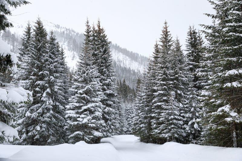 Bosque en montañas foto de archivo libre de regalías