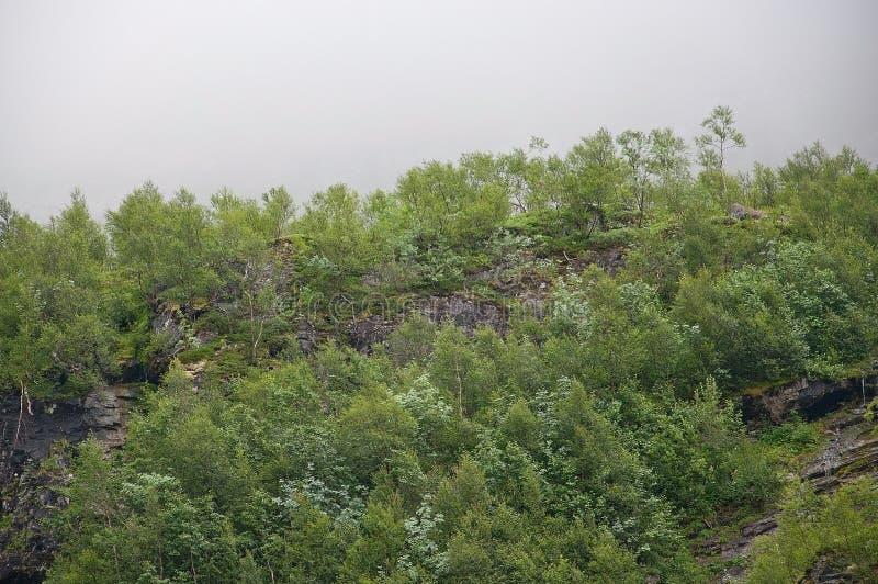 Bosque en niebla fotografía de archivo