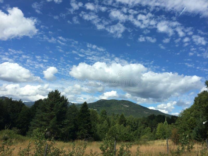 Bosque en Noruega imagen de archivo libre de regalías