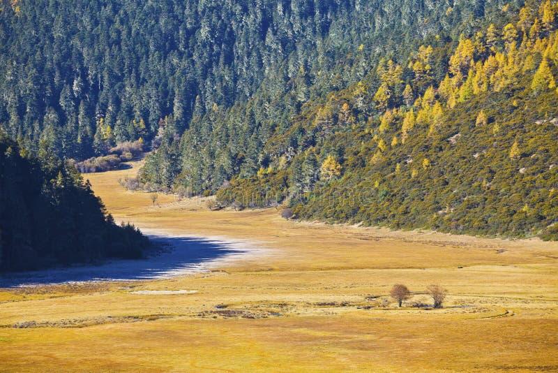 Bosque en otoño fotos de archivo