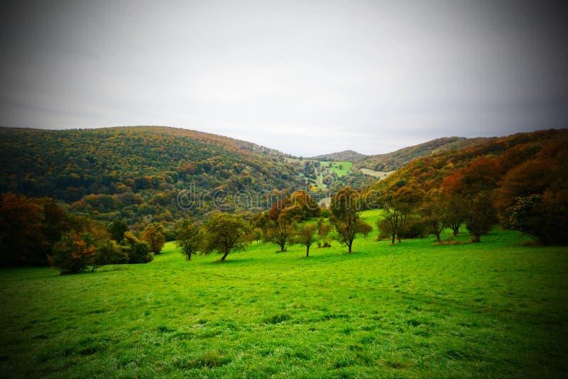 Bosque en otoño imagenes de archivo